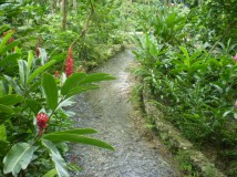 Coyaba River Gardens | Excursions In Oho Rios