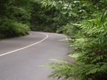 fern gully | Excursions In Oho Rios